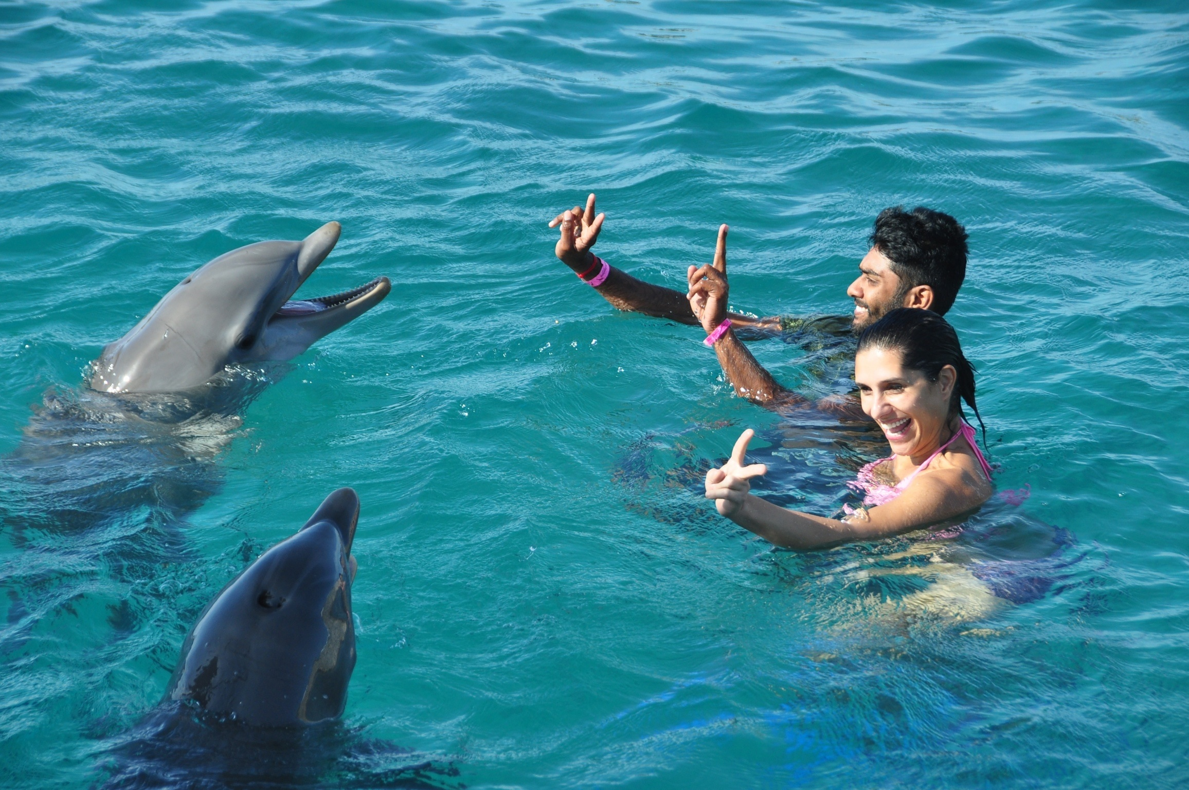 swim with dolphins