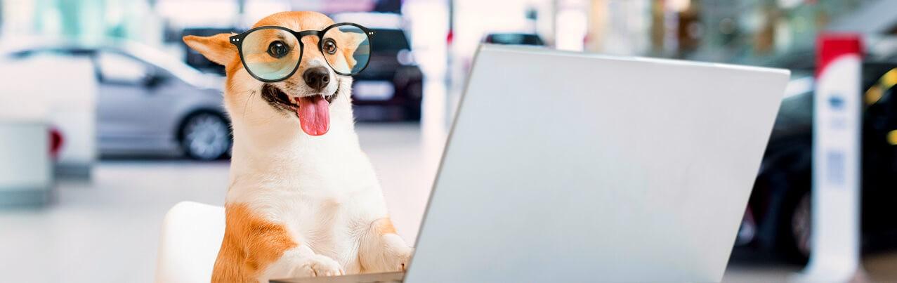 dog with eyeglasses using laptop