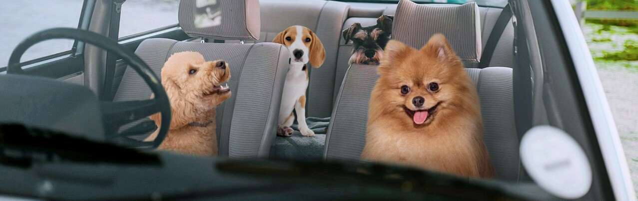 dogs inside a car