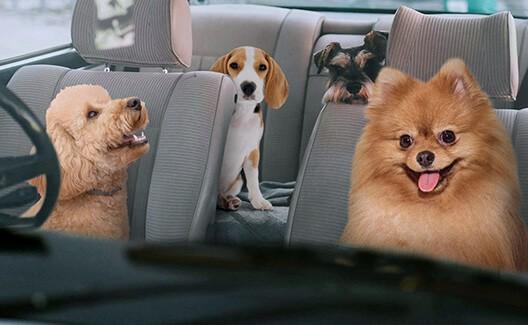 dogs inside a car thumbnail